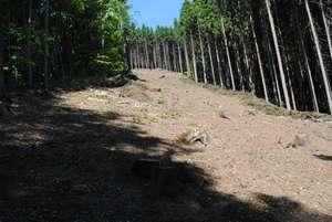 Lesní brigádaDSC_0002