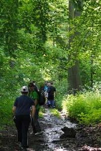 Lestkov cesta lesem DSC_0017